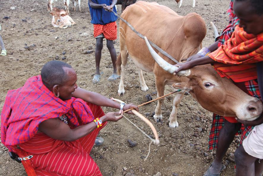 masai-mara.guided-13