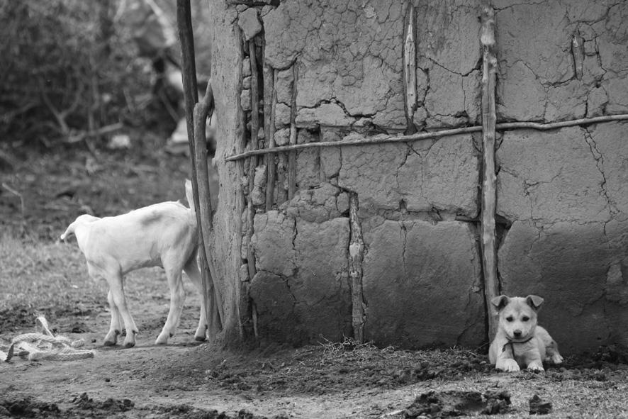 masai-mara.guided-7